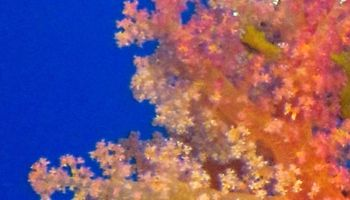/photos/dive-sites/7_6dc19_lg.jpg