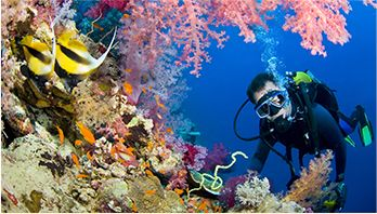 /photos/dive-sites/divespot-2_1895b_lg.jpg